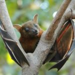 Astaga ! Kelelawar Indonesia juga Mengandung Virus Corona